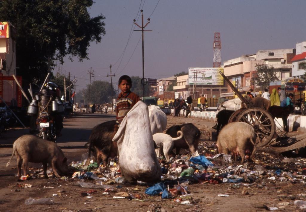 indien-kind-abfall-schweine