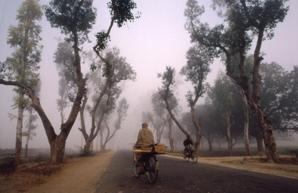 indien-velofahrer-morgen-nebel-baumallee