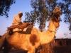 indien-kamelreiter