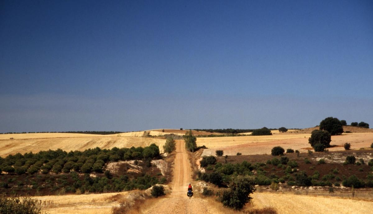 ruta-plata-oliven-weite-small