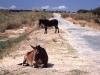 ruta-plata-pferde-strasse-small
