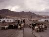 tajikistan-pamir-murghab-herde-small